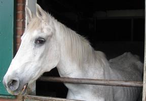 Luxe paarden