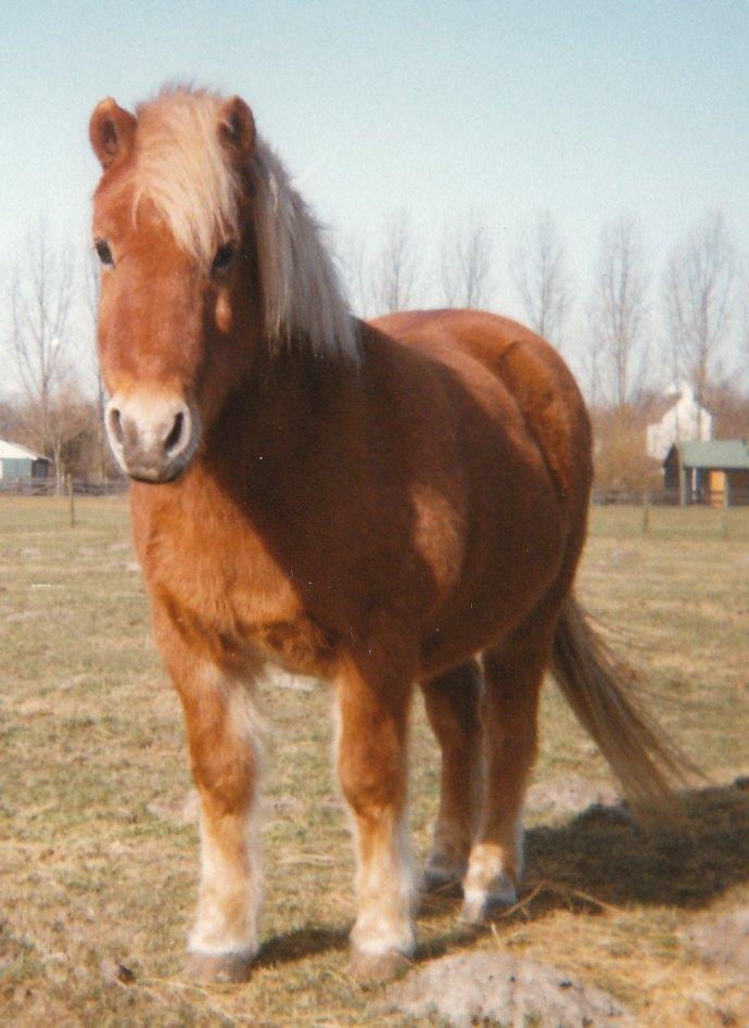 Sobere paarden